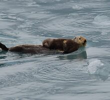 Sea Otter & Pup by William C. Gladish
