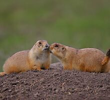 Prairie Dog Kiss by William C. Gladish