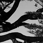 Branch out by MMan