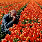 THE TULIP PHOTOGRAPHER by Johan  Nijenhuis