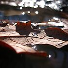 Leaf in the water (color) by kr1sta