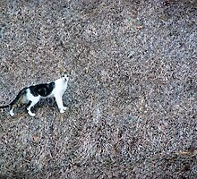 Cat on a Hot Grass Roof by Charles Dobbs Photography