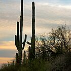 Tucson, Arizona - 2009 by Stephen Laycock