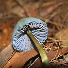 A blue shroom  by jack01