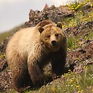 Grizzly & Wildflowers by William C. Gladish