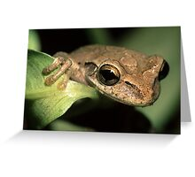 Tree Frog Portrait Greeting Card