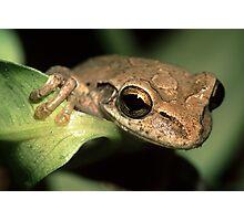 Tree Frog Portrait Photographic Print