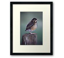 Baby Robin Portrait Framed Print