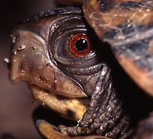 Turtle Portrait by William C. Gladish