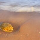 Golden Nugget by AntonyB