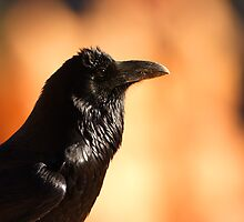 Raven Portrait at Sunset by William C. Gladish