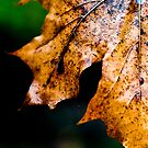 Autumn by trbrg