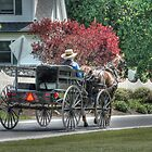 Amish Man and Wagon by Dyle Warren