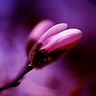 Fade to Pink and Purple  by Tina Longwell