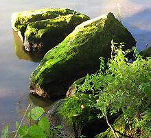 Mossy Rocks on The Seine by Orla Cahill