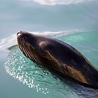 Sealion by Mark Baldwyn