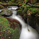 Paradise Gully - Cement Creek by Jim Worrall