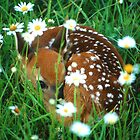 Fawn &amp; Wildflowers by William C. Gladish