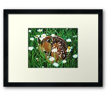 Fawn & Wildflowers Framed Print