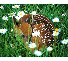 Fawn & Wildflowers Photographic Print