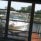 Cape Coral Backyard by Virginia N. Fred