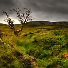 Lone Tree, Isle of Skye by Thomas Peter