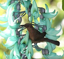 Brown honey eater by robmac