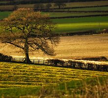Winter Fields, Cotswold by Thomas Peter