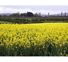 Yellow dance of Nature - Limavady County Derry Ireland Photographic Print