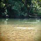 Skip - The Mulgrave River at Ross &amp; Locke - Queensland - Australia by Paul Davis