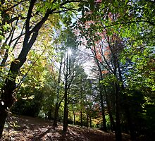 Autumn Foliage Mt. Wilson Blue Mountains by MiImages