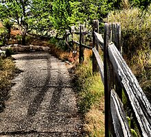 One Of Lifes Many Paths by Carla Jensen