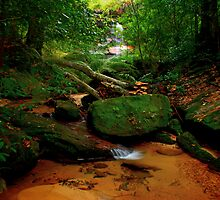 Lawson Creek, New South Wales by Andy Newman