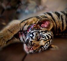 Tiger Cub by Ben Rees