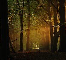 In the hazy morning forest again. by jchanders