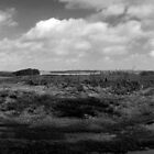 New Forest Panoramic by tristanmillward
