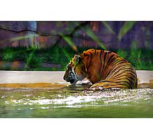"""""""It's my birthday and all I get is water"""" Photographic Print"""
