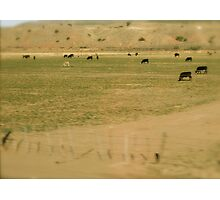 Sandia Mountain Foothills, Albuquerqe In April Series 2009 Photographic Print