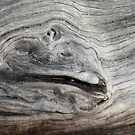 Driftwood Creature by Rosalie Scanlon