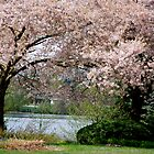 Blossom Arch on Como Lake by Carol Clifford