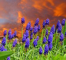 Grape Hyacinths by digitalmidge