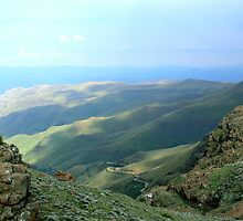 The SANI PASS by Carisma