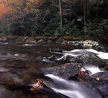 A Splash of Fall by William C. Gladish