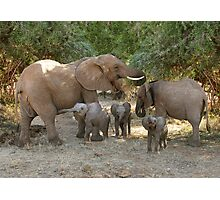 ELEPHANT FAMILY - SAMBURU Photographic Print