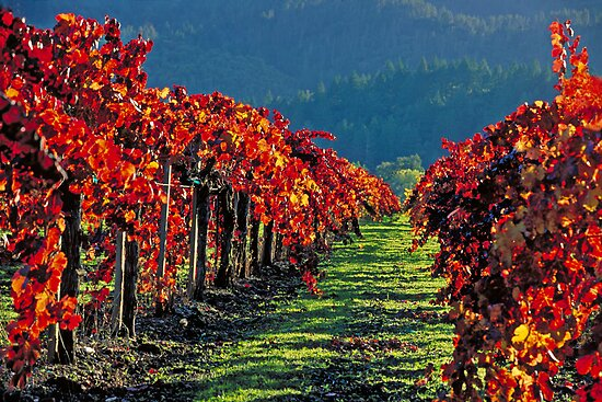 Wine Country Napa Valley by Robert George