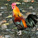 Moa Red Jungle Fowl by Teresa Zieba