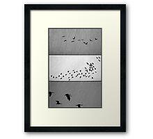 Ibis - Triptych Framed Print