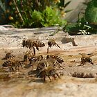 Wasps at Work by taiche