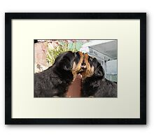 Sibling Rivalry - Arguing Like Dog and Dog Framed Print