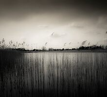 Water Reeds #25 by Paul Cooklin